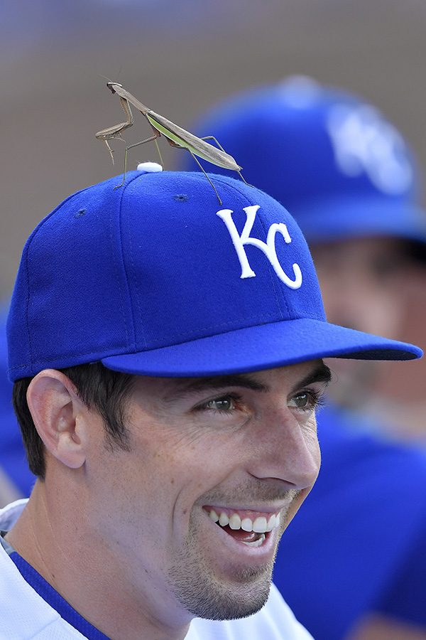 Kansas+City+Royals%27+Billy+Burns+had+some+helpful+praying+going+on+in+the+form+of+a+praying+mantis+on+his+hat+during+Saturday%27s+baseball+game+against+the+Toronto+Blue+Jays+on+August+6%2C+2016+at+Kauffman+Stadium+in+Kansas+City%2C+Mo.