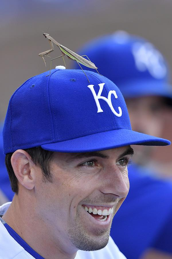 Kansas City Royals' Billy Burns had some helpful praying going on in the form of a praying mantis on his hat during Saturday's baseball game against the Toronto Blue Jays on August 6, 2016 at Kauffman Stadium in Kansas City, Mo.