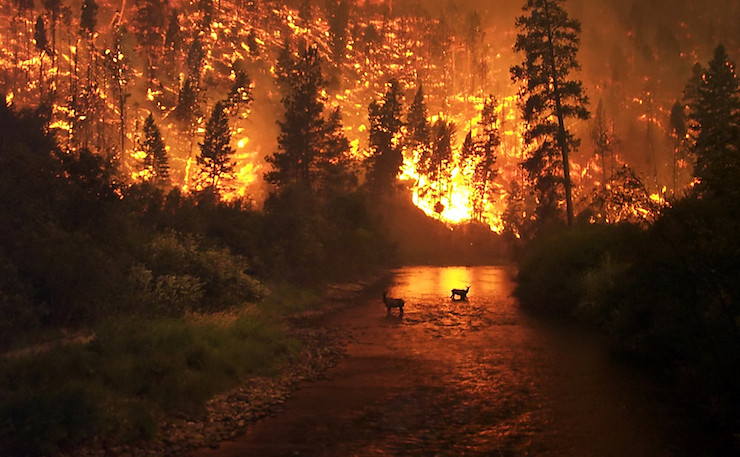 Wildfires are one of the many effects of climate change on wildlife.