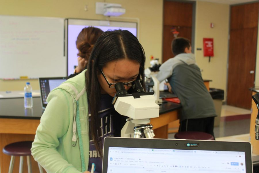 Junior Olivia Hilty participates in a lab in Principles of Biomedical Science, one of the career pathway classes.